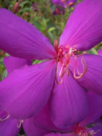 2010 陽明山花季10