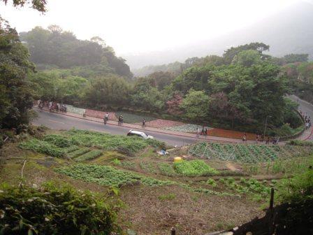 2010 陽明山花季55