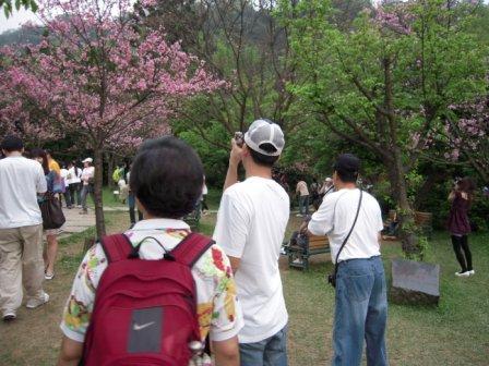 2010 陽明山花季66