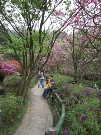 2010 陽明山花季65