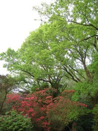 2010 陽明山花季99