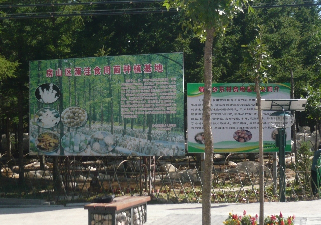 北京から四時間、「房山区蒲窪食用菌種植基地」