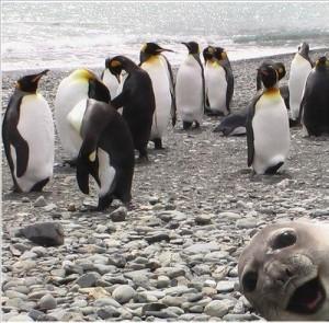 「いえーい みんな見てるー?」