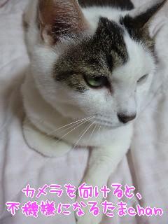 (●ゝω・)ノ コンニチハ
