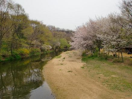 *みどりに桜色が素敵な光景になってる*