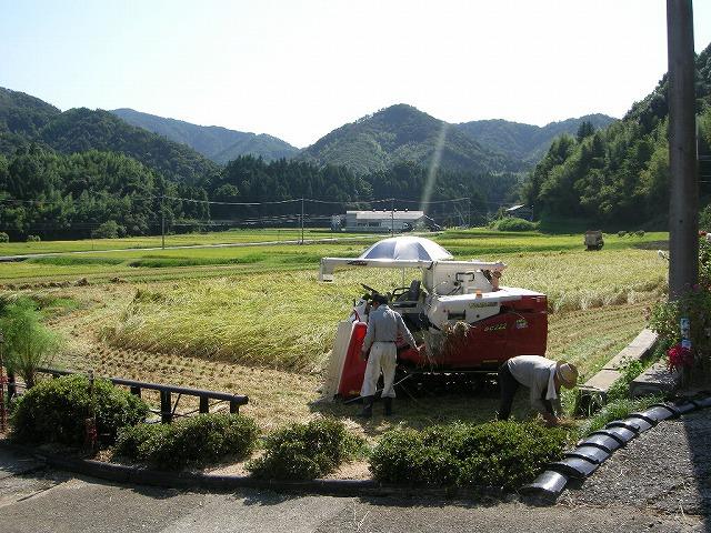 弥富稲刈り090903