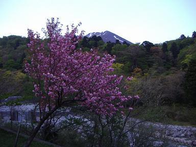大山と八重桜