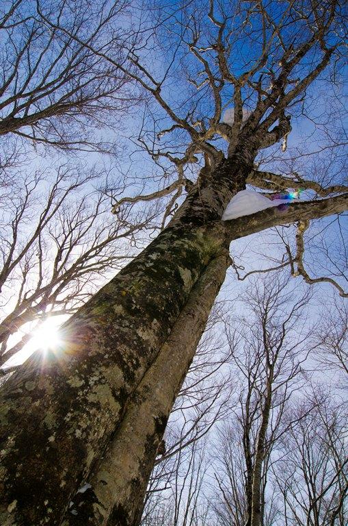 20120217-蔦の森2