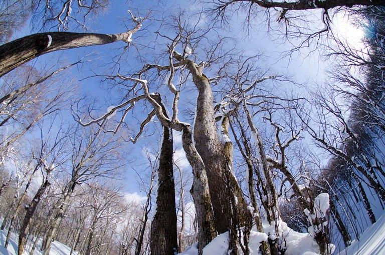 20120213-森の神達