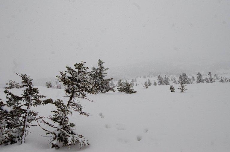 20120401-雪の回廊2