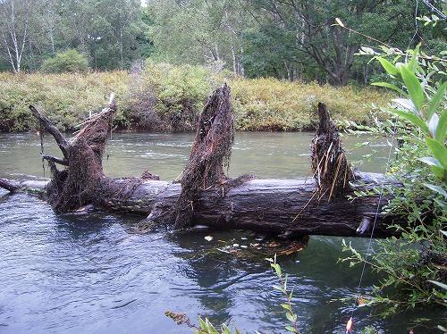 増水した湯川