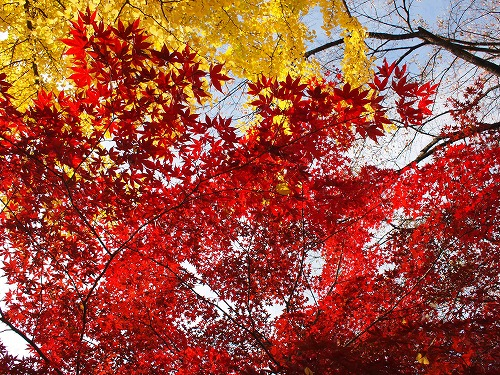 秋の空を見上げて