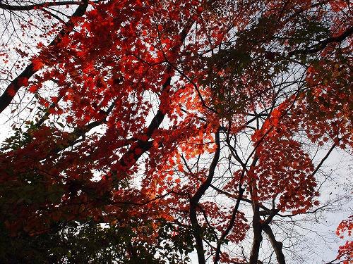 秋の空を見上げて その2