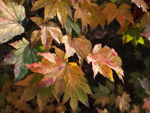 沼田公園の紅葉