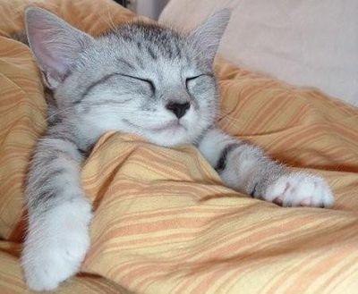 おやすみなさい猫