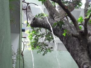 museum water