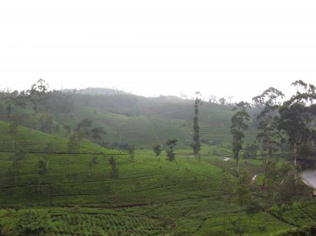Nuwaraeriya view