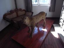 Hortonplains leopard