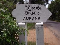 Aukana board1