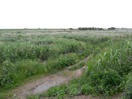 利根川河川敷の風景