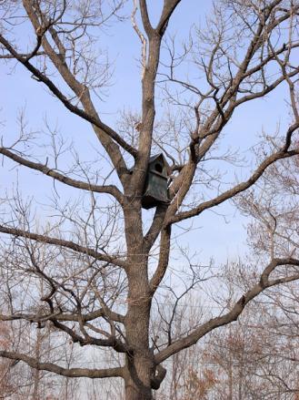 フクロウ巣箱