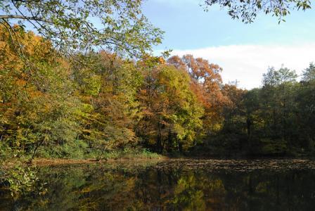 秋ヶ瀬の池
