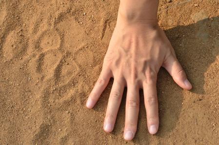 ハイエナの足跡