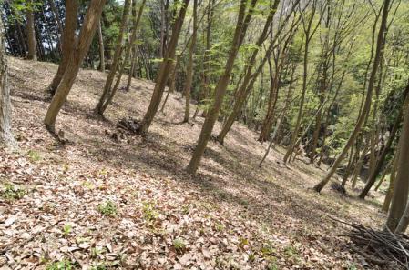 手入れされた林床
