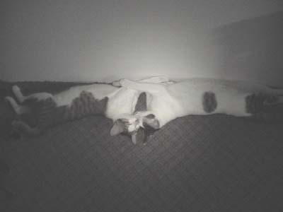 シンメトリー寝