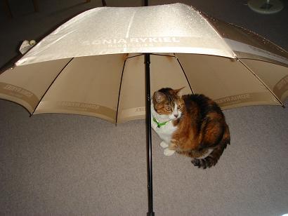 傘の中のチマサ