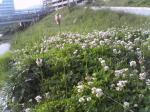 2007.5.04景色花