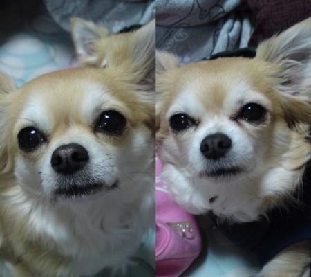 2010チョコぽぽ
