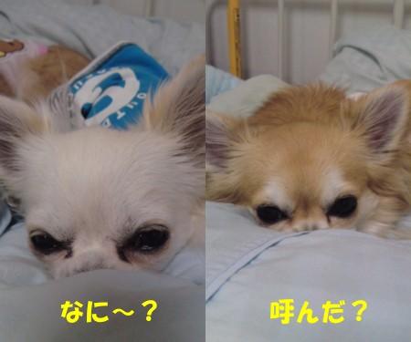 20101013レオぽぽ2