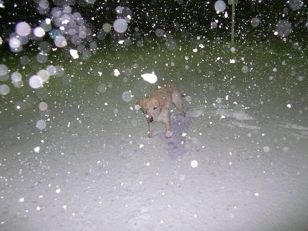 猛吹雪。。。