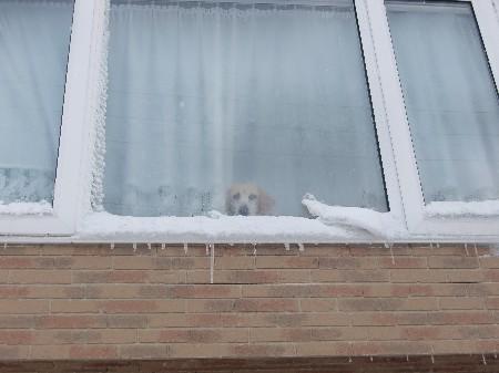 雪かきご苦労さんです。
