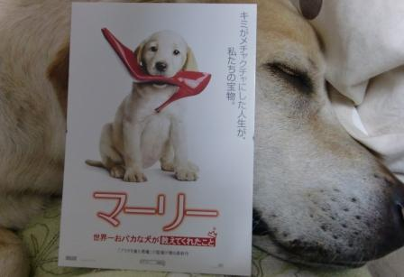 世界一おバカな犬