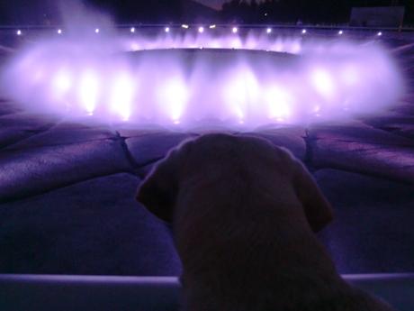 泳ぎたい・・・。
