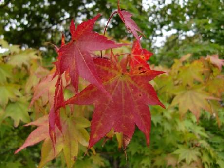 もう紅葉が・・・。
