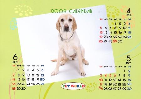 無料の愛犬カレンダー