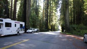 redwood5.jpg
