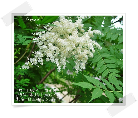 350chinsibai90621a1.jpg