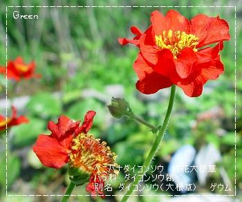 350daikonsou90520a1.jpg