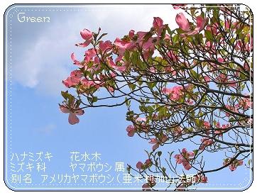 350hanamizukakai90430o7a.jpg