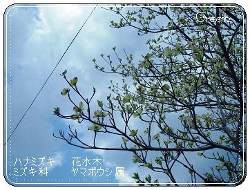 350hanamizuki90427a.jpg