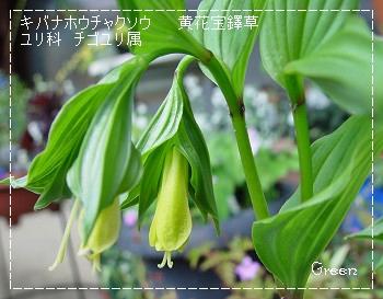 350houcyakusouki90523a.jpg