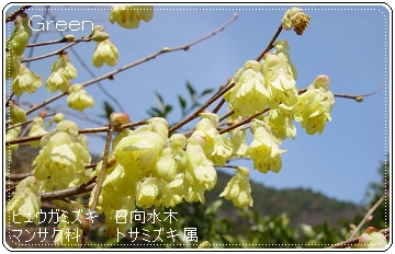 350iyomizuki90405b1.jpg