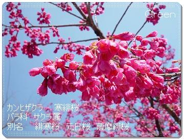 350kanhisakura90407e1.jpg