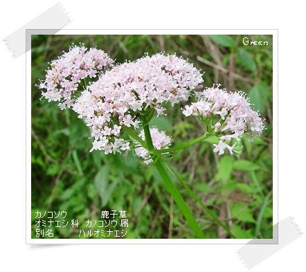 350kanokosou90519a.jpg