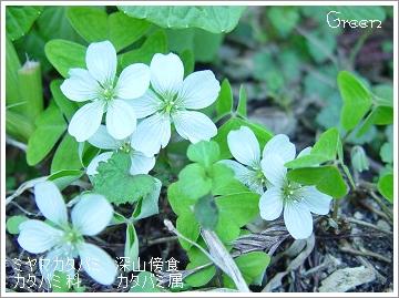 350miyamakatabami90411a.jpg