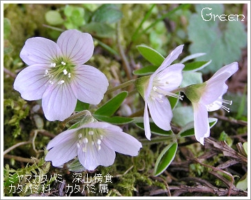 350miyamakatabami90411o2a.jpg